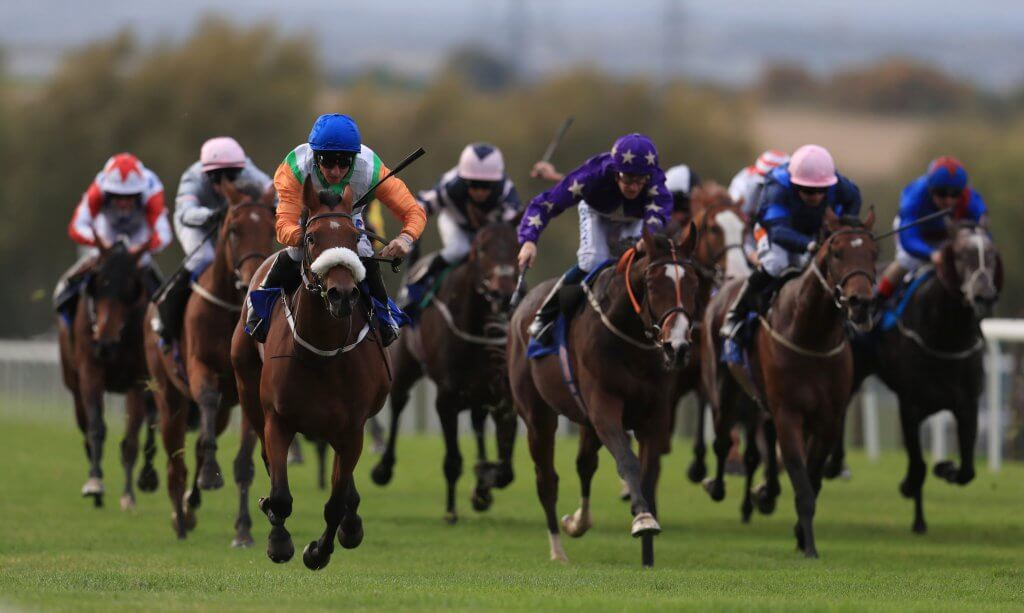 Horse Racing Daily Tips Main