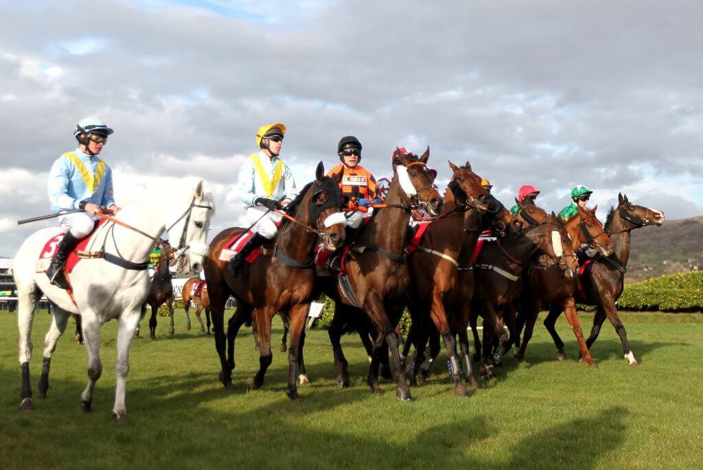 Cheltenham Festival Horse